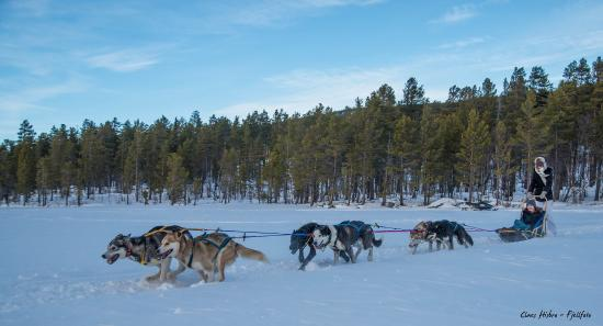 Trip with huskies in Geilo