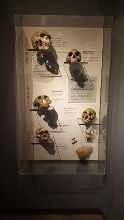 Claremont, Καλιφόρνια: Raymond M. Alf Museum of Paleontology