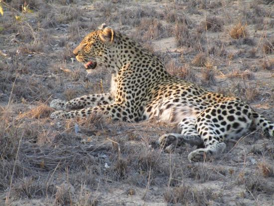 Timbavati Private Nature Reserve, แอฟริกาใต้: photo4.jpg