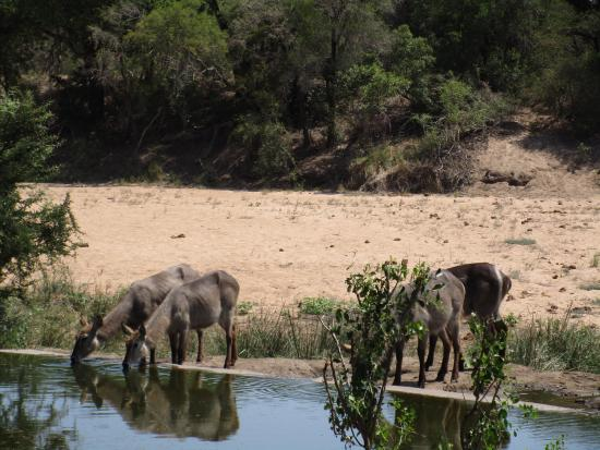 Timbavati Private Nature Reserve, Sudafrica: photo5.jpg