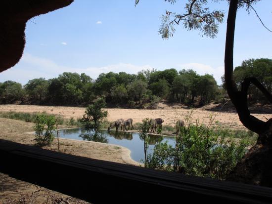 Timbavati Private Nature Reserve, แอฟริกาใต้: photo6.jpg