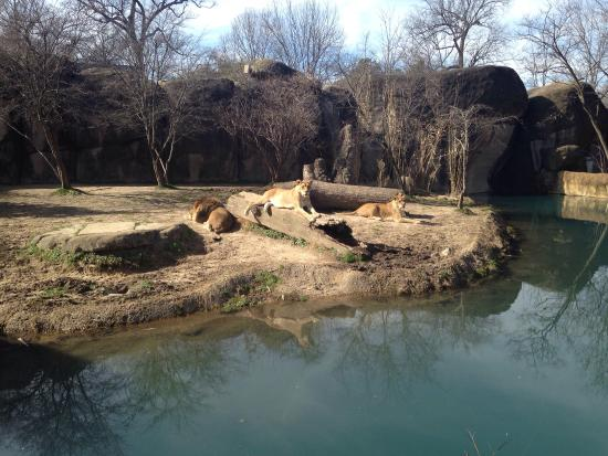 Memphis Zoo: photo0.jpg