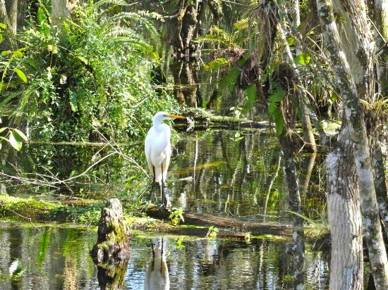 Everglades City, FL: DSC03972_large.jpg