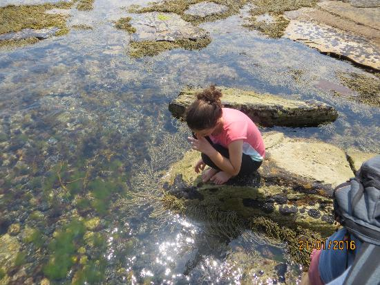 Triabunna, Αυστραλία: Rock Pooling - low tide at Painted Cliffs.