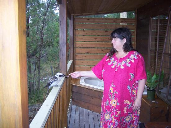 Windsor, Australia: Front deck and view @ Bingle Tree