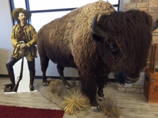 Oakley, Kansas: Buffalo