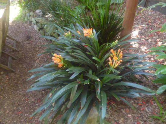 Северный Сидней, Австралия: Flowers