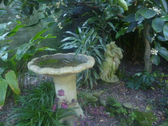 Северный Сидней, Австралия: Bird Bath