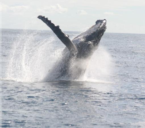Nelson Bay, Australia: Whales