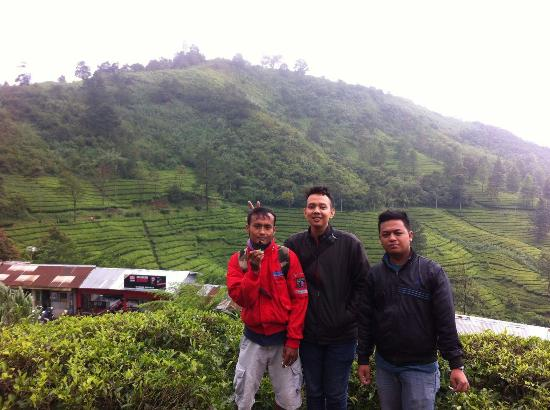 Jawa Barat, Indonesia: Kebun Teh Gunung Mas