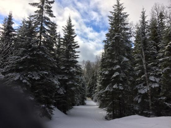 Leaf Lake Ski Trail