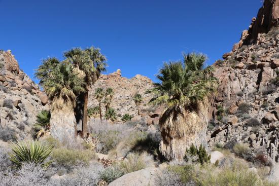 Twentynine Palms, كاليفورنيا: Lost Palm Oasis