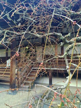 Tenryuji Temple: Very cool garden and temple