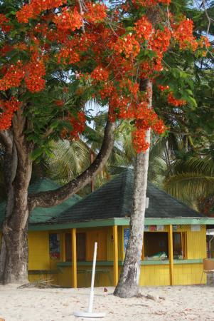 Pigeon Point Beach: Pigeon Point - Tobago
