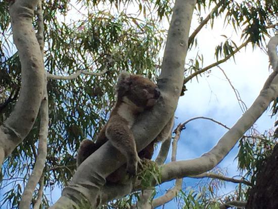 Paynesville, Australien: photo0.jpg