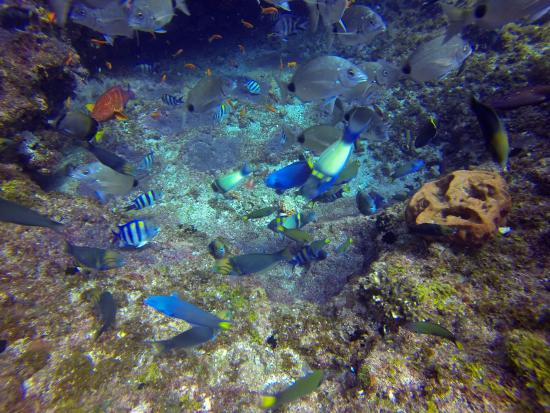 Umkomaas, África do Sul: Colorful collection of reef fish on Aliwal Shoal