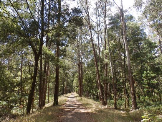 Domino Trail