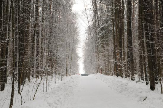Serpukhov, Rusia: Walking through the forest to the enclosures