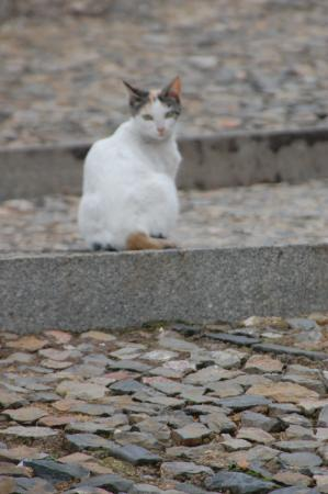 Almonaster La Real, Spanien: una gata en la calle, muy tranquila