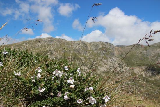 Thredbo Village, Australia: Summer flowers