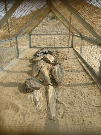 Akal Wood Fossil Park: Wood fossils covered to keep them protected (pic taken from gril)