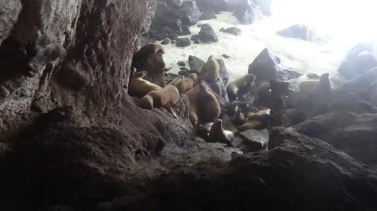 Florence, Oregon: vue dans la grotte