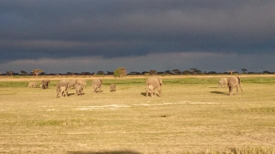 Kilima Safari Camp: Elephant herd crossing in the park at sunset