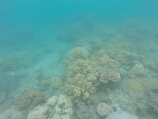 Cannonvale, Australia: Snorkel Site