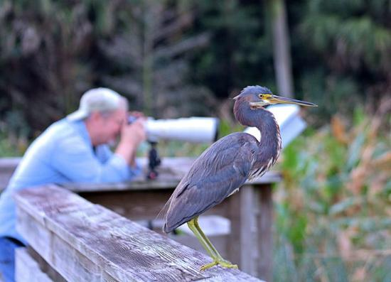 Boynton Beach, FL: Photographers and birds share the almost 2 miles of boardwalk.