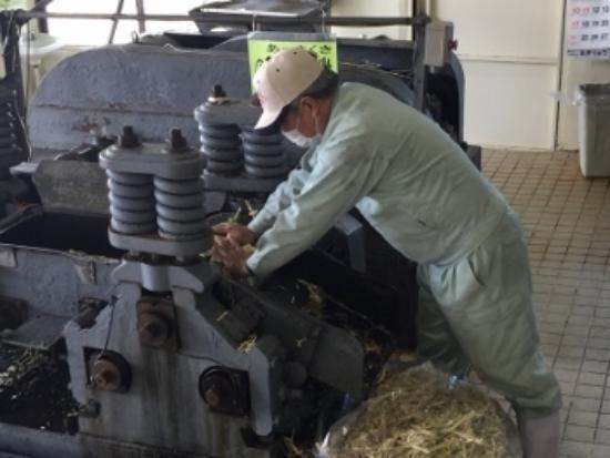 Yomitan-son, Japan: 潰れたサトウキビを再度押し込む