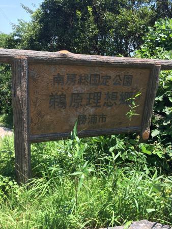 Foto de Katsuura