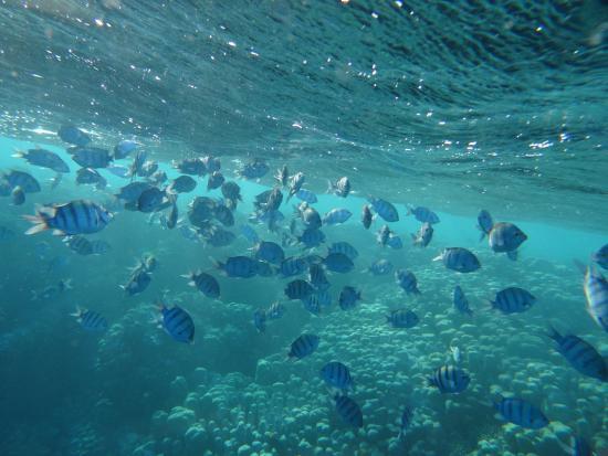 Gorgonia Beach Resort Hausriff