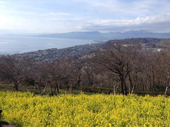 Ninomiya-machi, Japon : 吾妻山公園