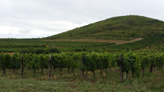 Legyesbenye, Mađarska: Tokaj wineyards north of the village