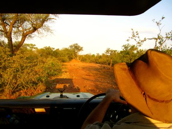 Balule Private Game Reserve, Zuid-Afrika: Lets go on safari!