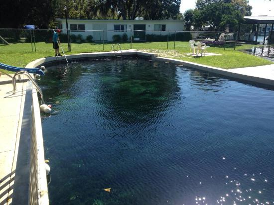 Pool At High Tide Picture Of Kings Bay Lodge Crystal River