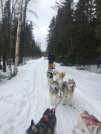 attraction review reviews expedition loup sledding saint jean orleans queb