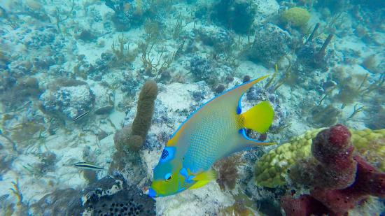 Spotted Angelfish : White spotted filefish - Picture of Aquamarine Beach Houses ...