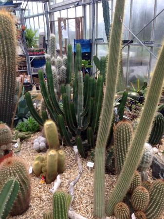 Winkleigh, UK: Cacti