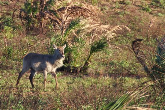 St Lucia, Sudáfrica: Sehr große Tiervielfalt