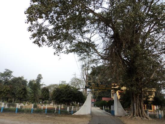 Buxa Jungle Lodge: the entrance
