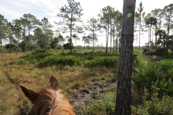 Saint Cloud, FL: riding