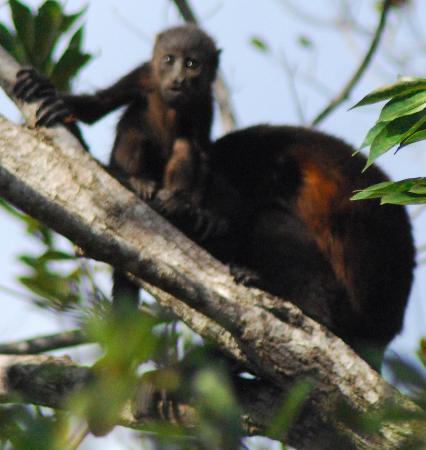 Playa Negra, Costa Rica: un famille qui visite régulièrement le site...