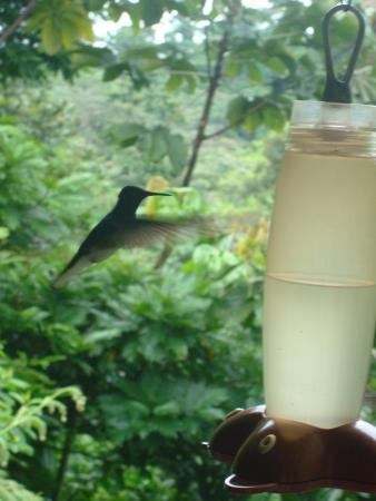 La Virgen, Costa Rica: It was really difficult to make a photo of flying colibri as they make 80 movements per minute