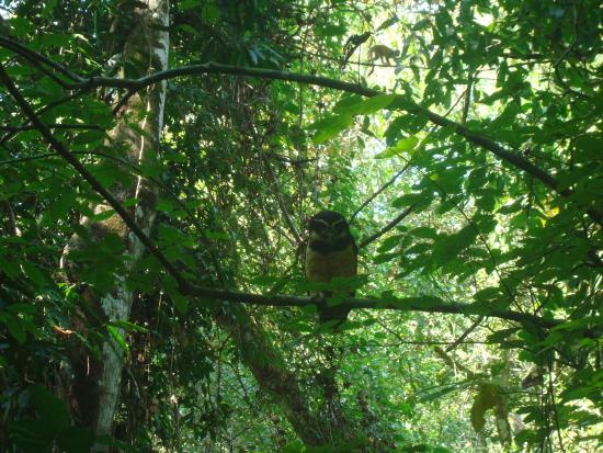Manuel Antonio Nature Reserve & Wildlife Refuge: Owl close the waterfall path