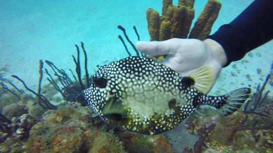 Bayahíbe, República Dominicana: Boxfish