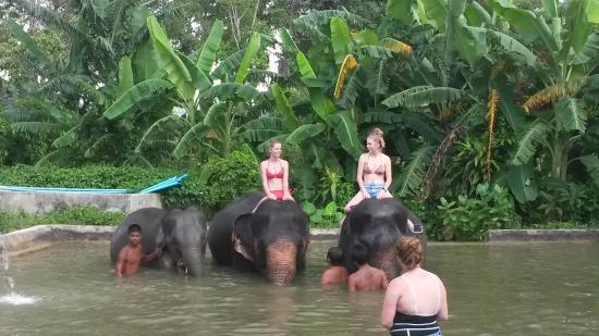 กมลา, ไทย: фото в ванне со слонами.