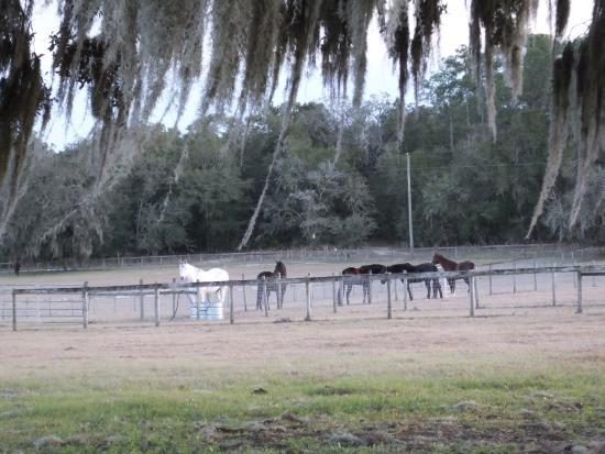 Bushnell, FL: Horse Pasture