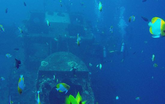 Kaimana Divers: Sea Life on the YO-257