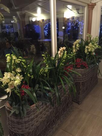 Grande Raccolta Di Orchidee Della Proprietaria Foto Di Gilda